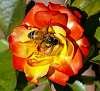 Spread them petals............