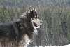 Woof II
