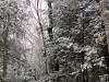Inside a Hemlock forest