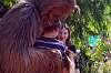 Tiger cub, Wookie and Gargoyle