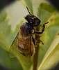 Climbing Bee......