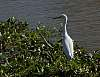 Cropping Experiment - Zeroing in on an Egret