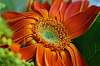 Macro flower shots