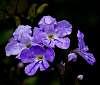 Little purple flowers.......