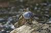 An Abundance of Toads