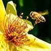 Beesy Day