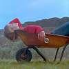 Rachel, chillin in a wheelbarrow