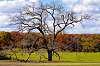 Grand Old Autumn Tree