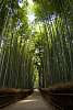 The Bamboo Groove