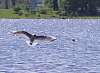 Nature Water bird frolic