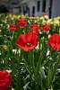 Simple flower shots