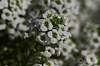 Flowers from Botanical Gardens