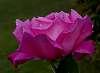 Glorious Pink.......