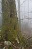 Foggy Camp Creek