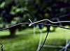 Wire Harmony
