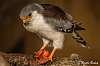 African Bird of Prey Sanctuary