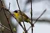 Birding at Great Bear Recreation Area
