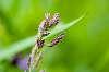 wild field flower