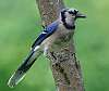 Birds on sticks