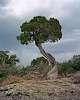 Tree Embrace