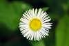 Todays Wild-flowers