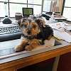 Desk Doggie