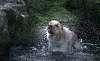 Trix - the Sea dog