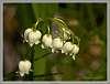 More tiny wildflowers