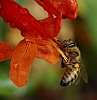 Orange Feed.......