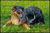 Winner - Weekly Challenge #287 Pets