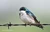 Waterton....a few more birds