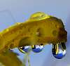 More Wet Scenes...........