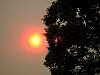 Wild Fire Smokey Sun