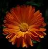 Richly Orange colour lights........