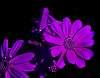 Just Purple......