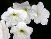 All White...........