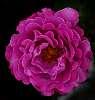 Heavy Pink........