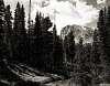 Shoshoni Peak Through the Trees