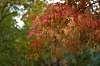 FA43 - autumn bokeh