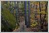 Algonquin park- Lookout Trail