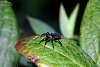 Its bitsy spider