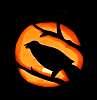 Robin's Raven - Happy Halloween!