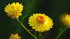 Sticky Paper Daisies
