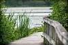 Marsh pathway...