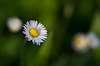 Flower à la Leitz Colorplan projector lens ...