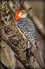 Woodpecker PP Challenge