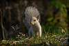 Uncommon leucistic squirrel