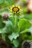 Flower à la Kisanon CCTV lens
