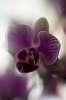 Orchid à la CCTV lens ...