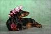 fashionable doggie :)